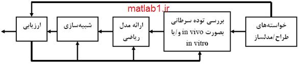 cancer_tumor_modeling_MATLAB_code
