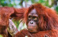 دانلود کتاب Lonely Planet Borneo سال 2016